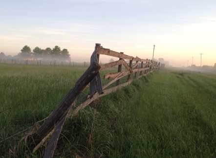 Fence row in fog with telephone poles.jpg